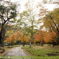 北海道圓山公園