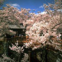 高遠城址公園 ©Nagano Prefecture/©JNTO