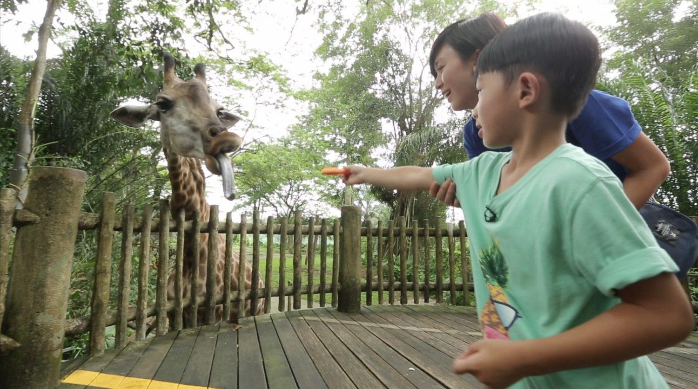 新加坡旅遊局邀請了唐寧舉家到新加坡旅遊,與囝囝俊俊一起遊覽新加坡動物園及首次餵飼長頸鹿。